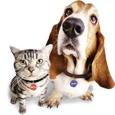 Pets w-ID