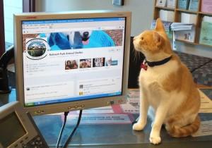 cat-facebook