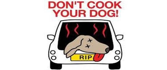 Dogs Can Bake in Hot Cars!