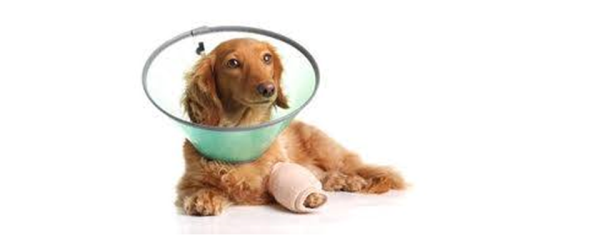What happens to the injured stray pets?