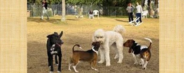 Dog park etiquette important to pets' safety