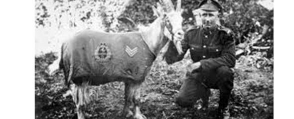 War heroes with four legs