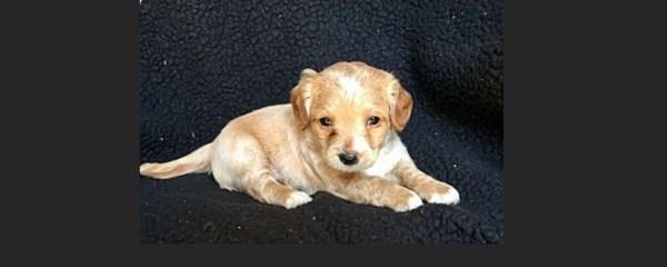 Puppy Envy!