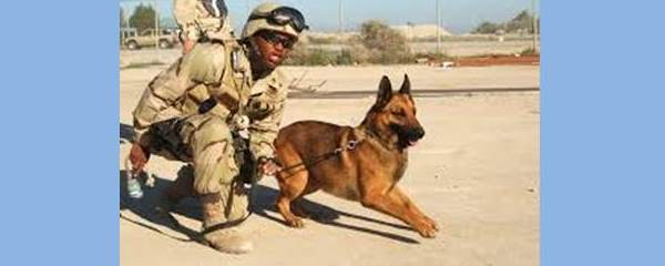 Memorial Day is for Military Animals too