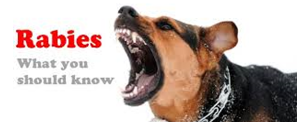 Can You Get Rabies From A Shelter Dog