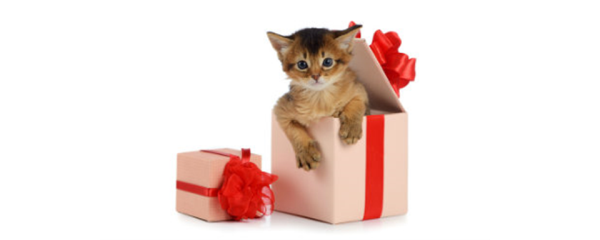 Giving Pets as a Gift – the Right Way