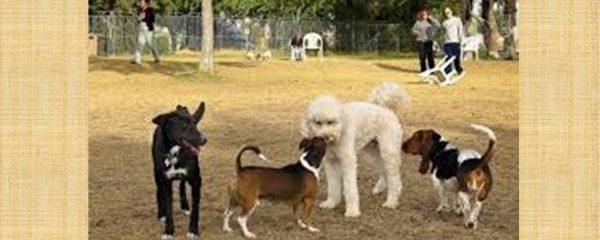 Dog park etiquette important to pets' safety
