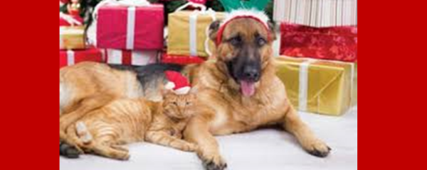 Gifts that count for our four-legged friends