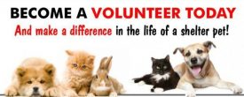 Why YOU should volunteer at the shelter