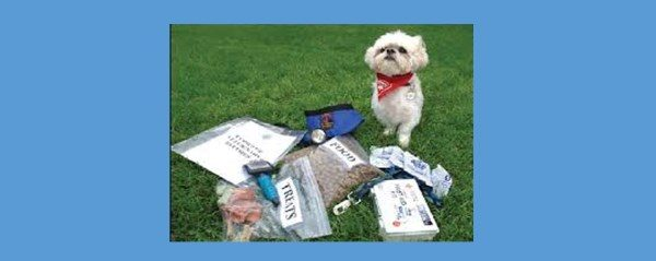Pet Emergency Preparedness – Are You Ready?