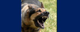 Survive a Dog Attack