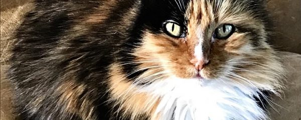 """I am """"Amber"""" … Please Take Me Home and Love on Me"""